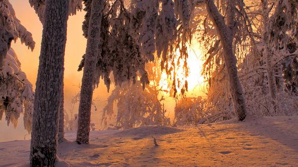 Обои Солнце освещает зимний лес