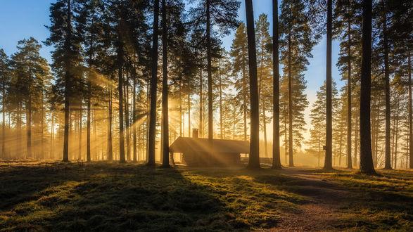 Обои Солнце освещает домик в сосновом лесу