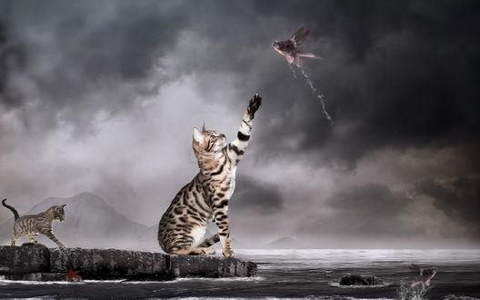 Обои Кот ловит лапой рыбу, позади идет еще один кот
