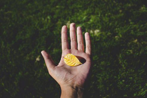 Обои Желтый листок в руке на фоне травы