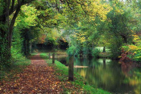Обои Дорожка в парке, усыпанная опавшими листьями, по берегу небольшой реки, Уэльс, Англия