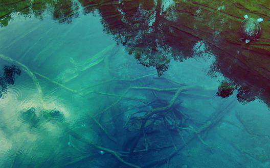 Обои Небольшая лагуна с прозрачной водой, где на дне лежат ветки, а сбоку в воду спускается черепаха