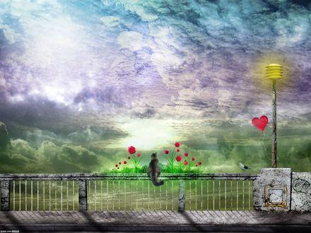 Обои Кот сидит на ограждении и смотрит на облачное небо, by DarkWizard