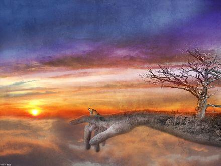 Обои Кот сидит на огромной руке на фоне закатного неба, by DarkWizard