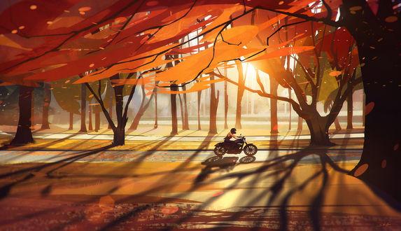Обои Мотоциклист едет по дороге мимо осенних деревьев, by Grivetart