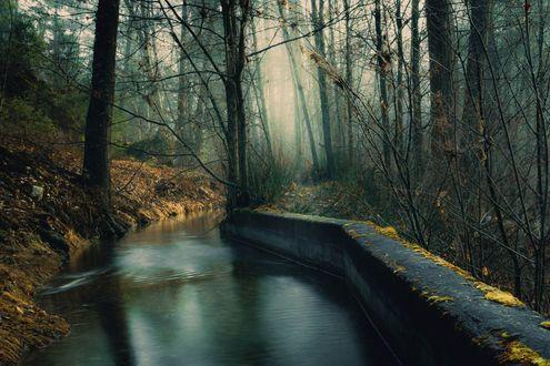 Обои Туманная осень в парке, фотограф Raul Weisser