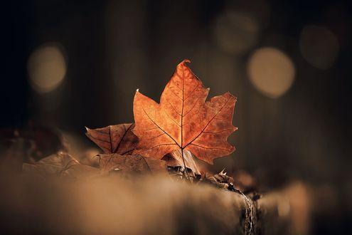 Обои Осенние листья на фоне бликов, фотограф Luis Valadares