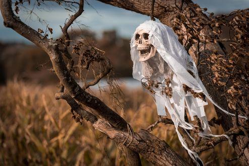 Обои Хэллуин / Halloween, человеческий череп в бинтах висит на ветке засохшего дерева