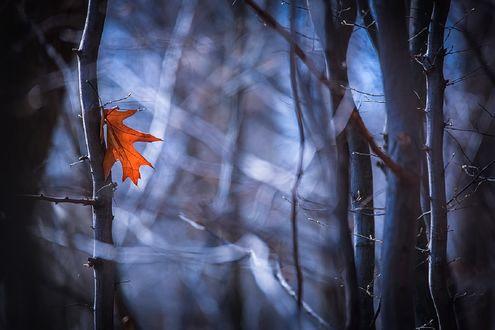 Обои Осенний листик на дереве, фотограф Вячеслав Мищенко