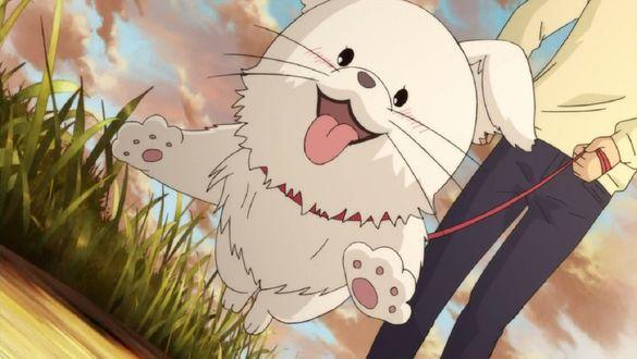 Обои Парень держит на поводке белого пса