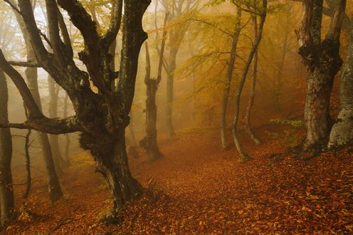 Обои Осенний лес в тумане, фотограф Бруно Томский