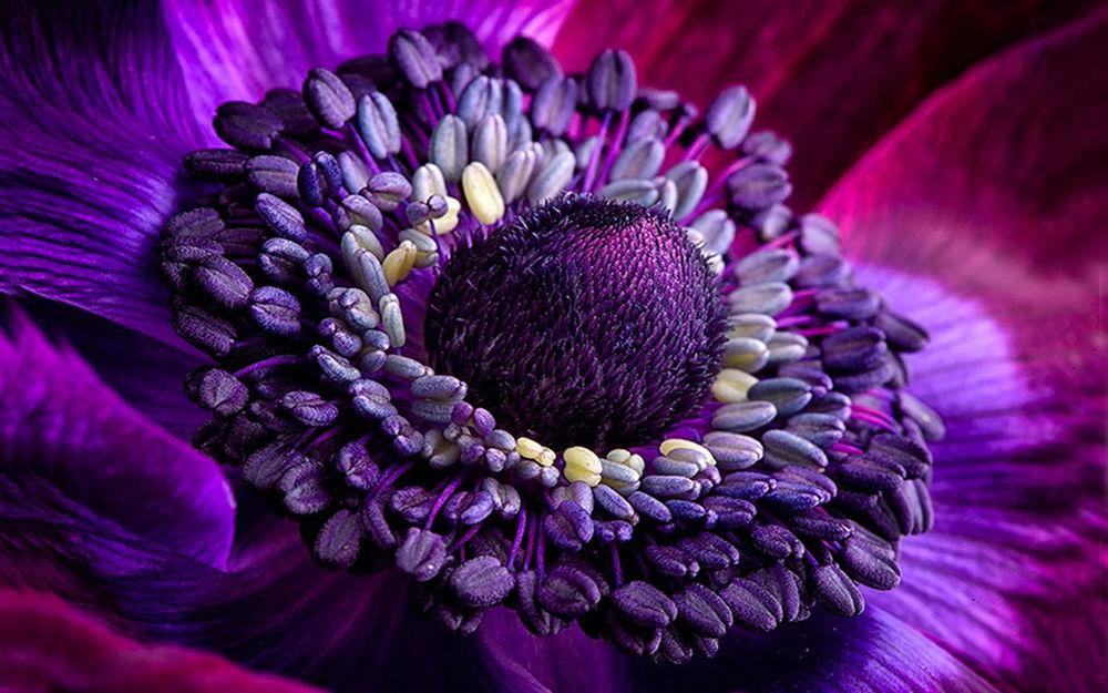 most beautiful flowers - 981×653