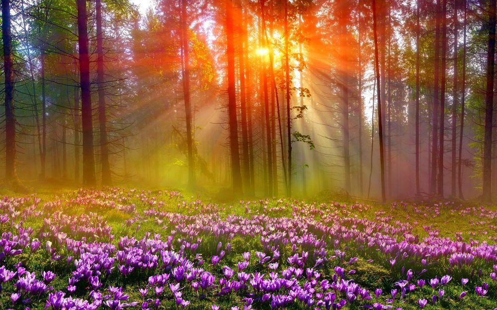Фото цветы в лесу