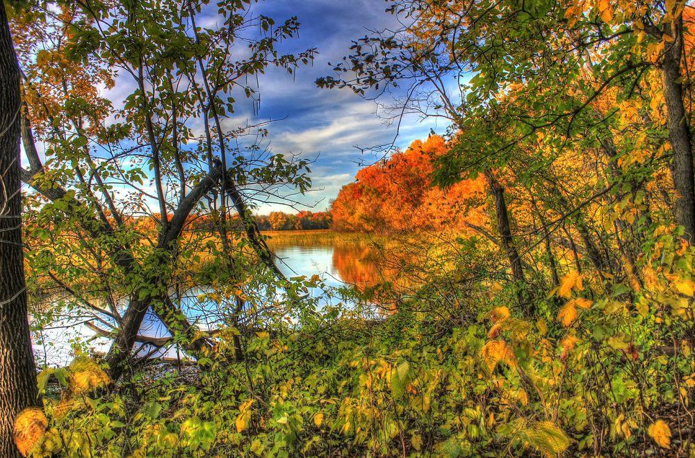 Обои для рабочего стола Осенние деревья на берегу небольшого водоема на фоне голубого неба