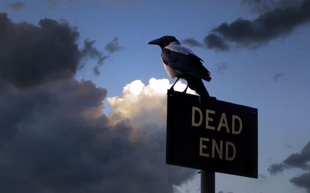 Обои для рабочего стола Сорока сидящая на дорожном знаке с надписью тупик / DEAD END
