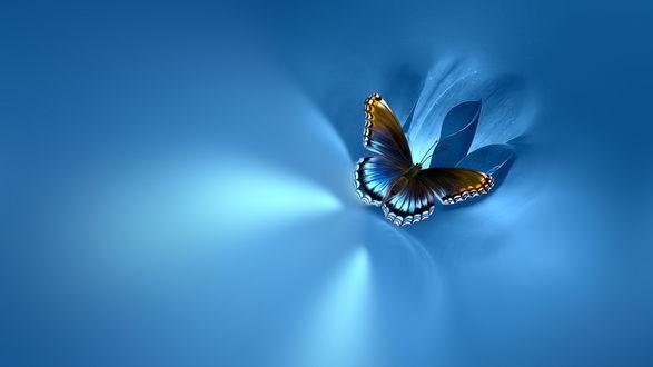 Обои Бабочка сидит на синем цветке, на голубом фоне
