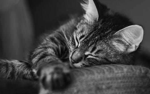 Обои Полосатый котенок сладко спит