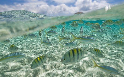 Обои Рыбы в подводном мире океана