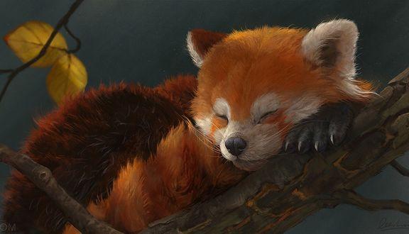 Обои Красная панда спит на ветке дерева, by Leesha Hannigan