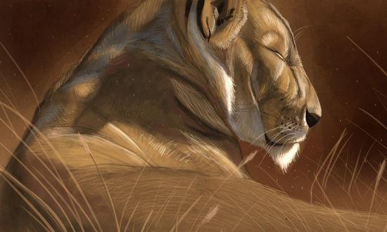 Обои Львица дремлет, лежа в траве, Art of Aaron Blaise