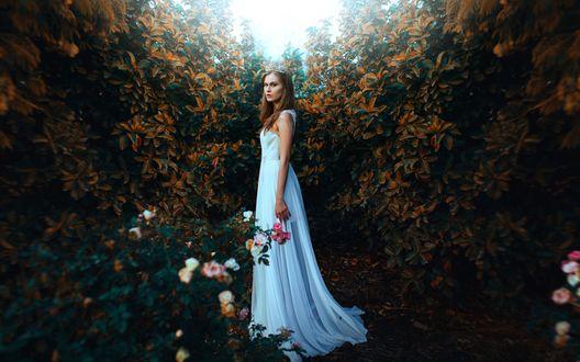 Обои Девушка в белом, длинном платье стоит возле цветущего куста роз, фотограф Ronny Garcia