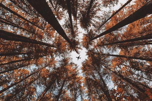 Обои Самолет под кронами деревьев, фотограф Nick Verbelchuk