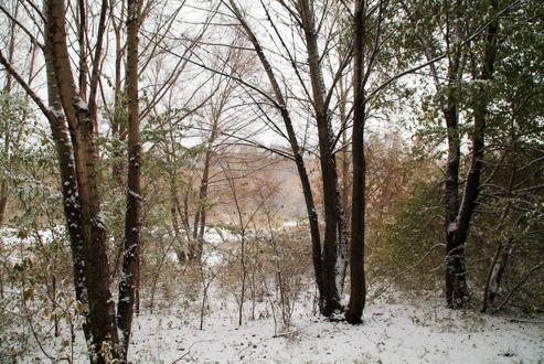 Обои Первый снег в парке, фотограф Ирек Фахрутдинов