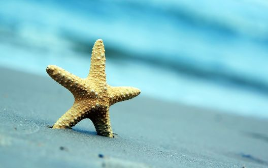 Обои Морская звезда на пляже