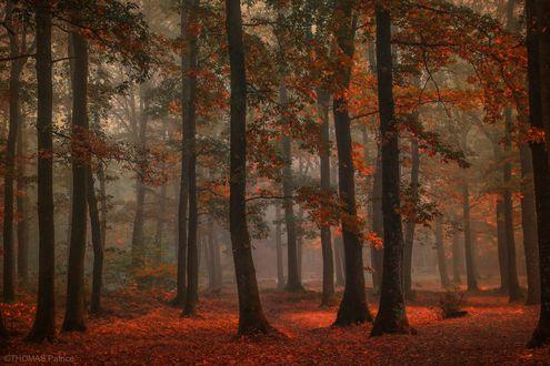 Обои Осенний парк, фотограф Patrice Thomas