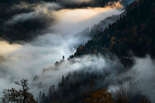 Обои Утренний лес в тумане, фотограф Adnan Bubalo
