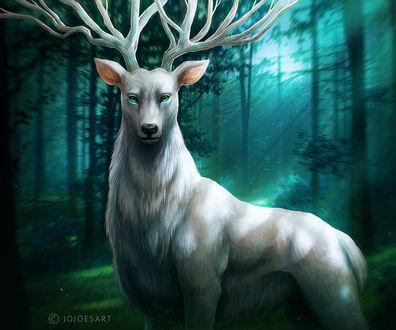 Обои Белый олень-дух леса, by JoJoesArt