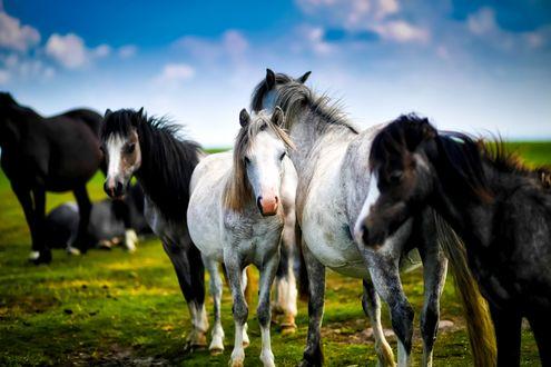 Обои Лошади стоят на земле на фоне неба и облаков