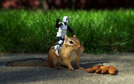 Обои Имперский штурмовик из фильма Звездные Войны / Star Wars верхом на бурундуке