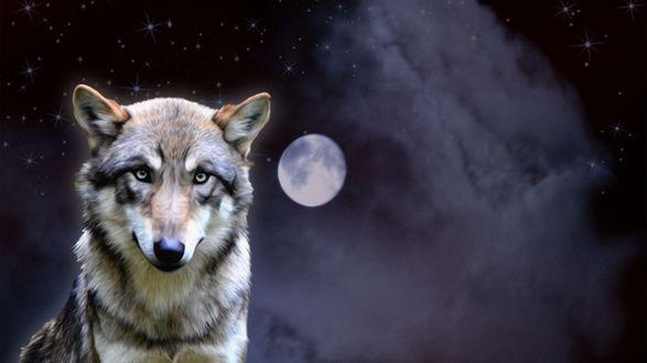Обои Волк сидит на фоне ночного неба, с полной Луной