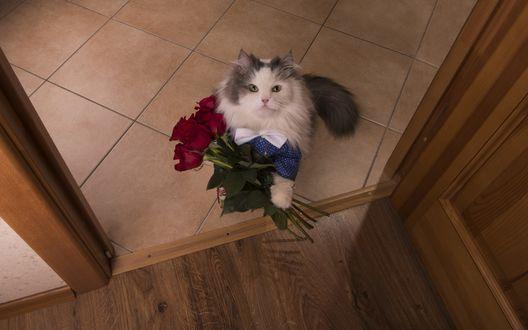 Обои Пушистый кот с букетом красных роз стоит у открытой двери