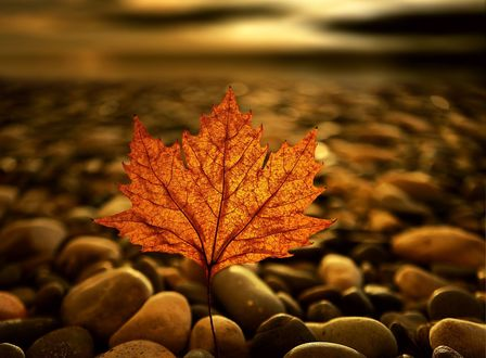 Обои Осенний лист на гальке, фотограф Anna Ovatta