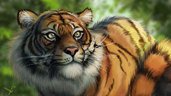 Обои Тигр смотрит вперед, by victter-le-fou