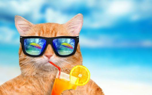 Обои Рыжий кот пьет сок с лимоном, в его очках отражаются зонтики на морском побережье