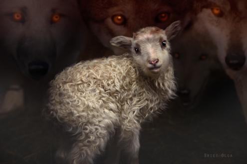 Обои Белая овечка на фоне волков, by Briet Olga