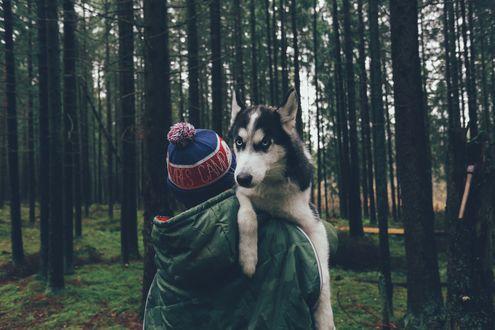 Обои Парень несет на руках собаку породы хаски