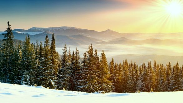 Обои Красивый ельник в снегу на фоне гор и солнечного неба