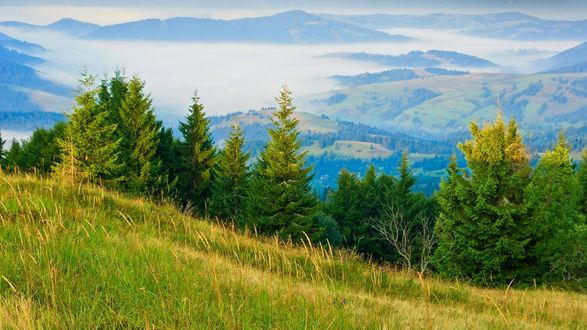 Обои Зеленый ельник летом на фоне гор и холмов в туманной дымке