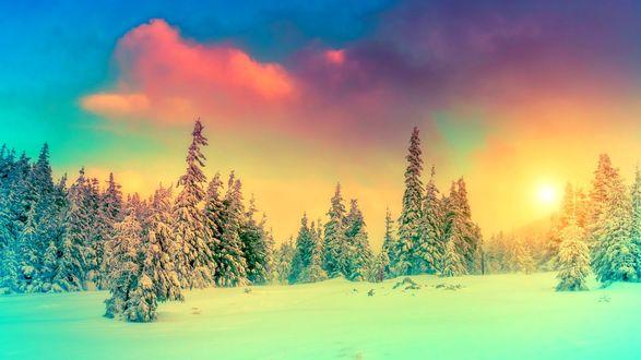 Обои Ельник в заснеженном лесу на фоне разноцветных облаков в небе