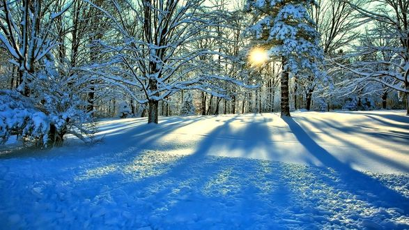 Обои Лучи солнца пробиваются сквозь красивый зимний лес в снегу