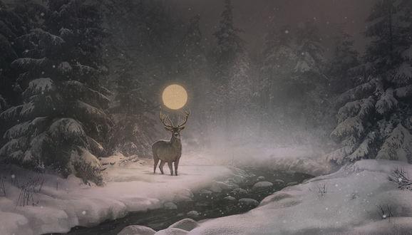 Обои Олень с луной в рогах стоит на берегу небольшой речки в зимнем лесу ночью, by OlgaWilson