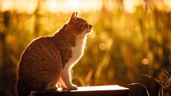 Обои Большой бело-рыжий кот на фоне бликов, фотограф Seiji Mamiya