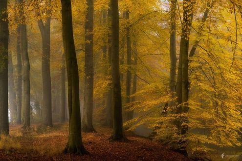 Обои Осенний лес, фотограф Lars van de Goor