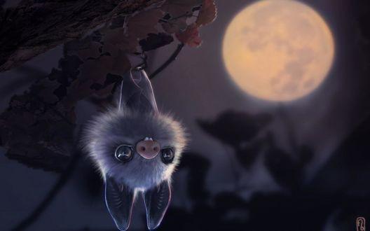 Обои Летучая мышь висит на ветке на фоне луны