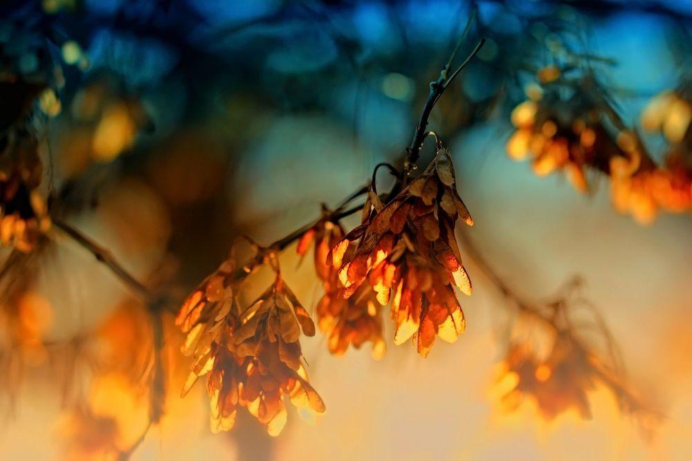 Картинки по запросу ясень осенью
