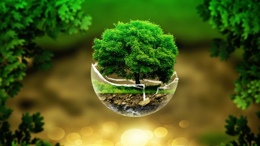 Картинки по запросу зелёное дерево